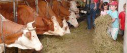 Erlebnisurlaub auf dem Bauernhof Bayern Familienferien mit Kindern