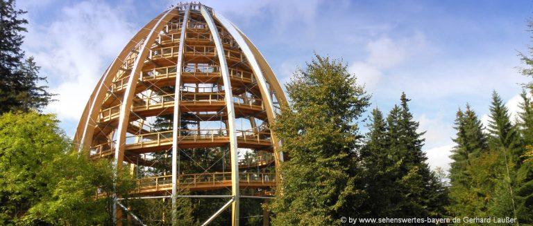 sehenswürdigkeiten-bayerischer-wald-ausflugsziele-waldwipfelpfad-highlights