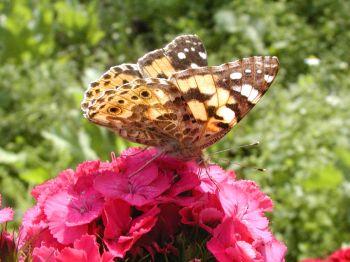 Sommerurlaub Bayern Sommerferien Sommerblumen