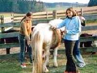 Reiterhof, Ponyhof in Bayern