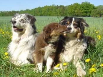 Urlaub mit hund in Bayern