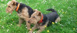 Ferien mit Haustier in Bayern Hundeurlaub Bayerischer Wald