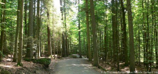 bayerischer-wald-ludwigsthal-tierfreigelände-rundwanderweg-panorama-660