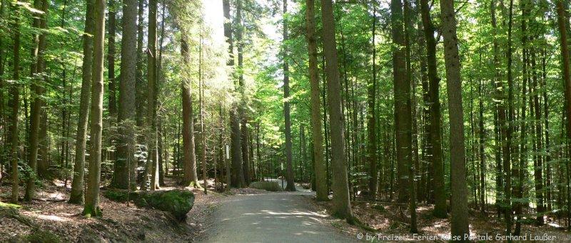 Wandern Nationalpark Bayerischer Wald Wanderwege Natur Bäume