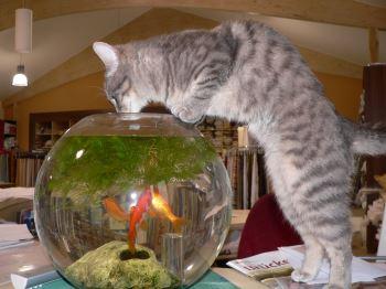 witzige Tierbilder aus Bayern Tieraufnahmen lustige Tierfotos