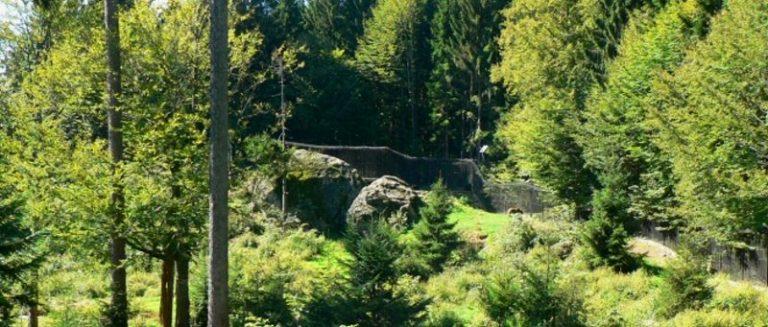 nationalparkzentrum-lusen-bayerischer-wald-baerengehege-panorama-660