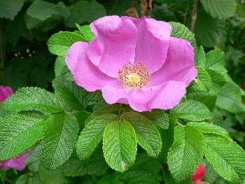 Bilder und Fotos Blumen und Pflanzen