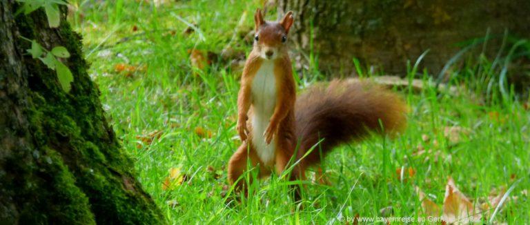 tierfotos-süsse-tierbilder-lustiges-eichhörnchen-natur-tiere