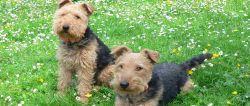 Urlaub mit Hund Ferienhäuser tierfreundliche Unterkünfte